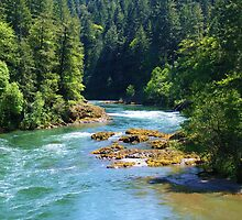 BEAUTIFUL FLOWING OREGON RIVER IN THE WOODS by CHERIE COKELEY