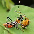 It's a bug-eat-bug world by AnnaKT