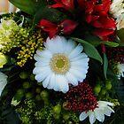 Beautiful White Gerbera Daisy by BlueMoonRose