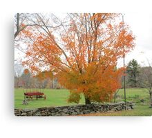 A Tree in Autumn Canvas Print