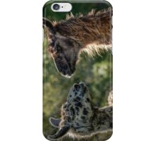 Sweet Llamas iPhone Case/Skin