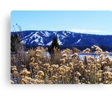 WINTERY PLANTS AND SNOW AT BIG BEAR LAKE Canvas Print