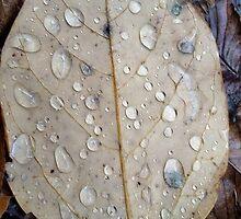Leaf with rain droplets by Shinyu