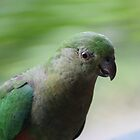 Australian King-Parrot, Female by aussiebushstick