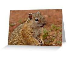 Did I Forget Something? - Squirrel - SA Greeting Card