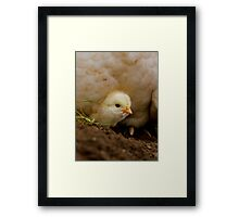 Peek-A-Boo - Happy Easter - Chick NZ Framed Print
