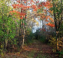 Fall Colors by EBArt