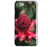 Waratah - Telopea speciosissima iPhone Case/Skin