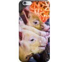 Piglets iPhone Case/Skin