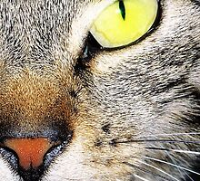 Cat's yellow eyes by cafelab