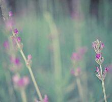 Lavender landscape by lightwanderer