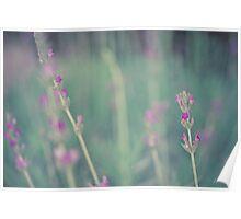 Lavender landscape Poster