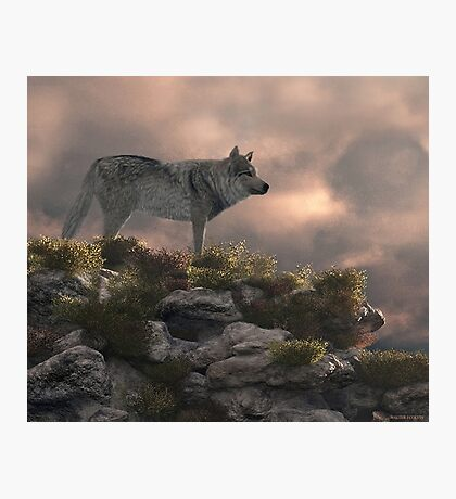 Timber wolf Photographic Print