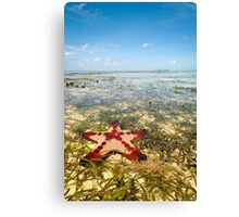 Horned Sea Star Canvas Print