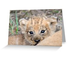 Infant lion cub(mommy what is the big thing looking at us?) Greeting Card