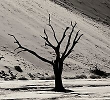 Dead Vlei with dead trees in desert landscape of Namib BW 03 by travel4pictures