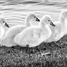 All in a Row by Mieke Boynton