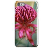 Waratah Splendour iPhone Case/Skin