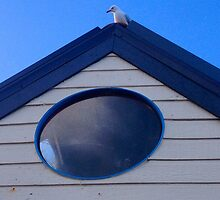 Curious Seagull by Ozziedogs