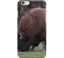 American Field Buffalo grazing iPhone Case/Skin
