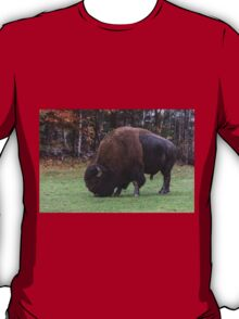 American Field Buffalo grazing T-Shirt