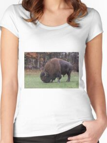 American Field Buffalo grazing Women's Fitted Scoop T-Shirt