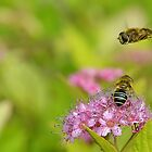Hoverflies  [ Please read description ] by relayer51