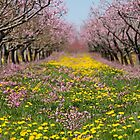 Blossom Heaven by Marilyn Cornwell