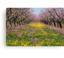 Blossom Heaven Canvas Print