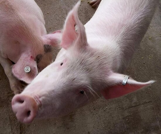 Well...Pork You, Too by WildestArt
