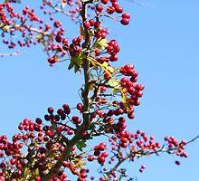 Autumn Berry by sammiejayjay