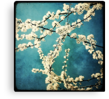 Waiting for Spring to Bloom Canvas Print