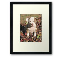 """Spice"" In The Fall Leaves Framed Print"