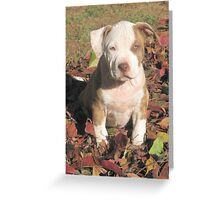 """""""Spice"""" In The Fall Leaves Greeting Card"""
