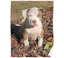 """""""Spice"""" In The Fall Leaves Poster"""