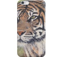 Watching tiger iPhone Case/Skin