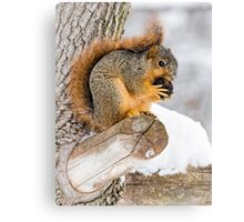 Snowy Squirrel Canvas Print