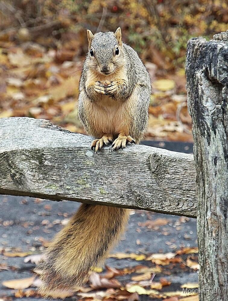 Nutty Buddy by Monnie Ryan