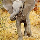 AFRICAN WILDLIFE by Shannon Wild