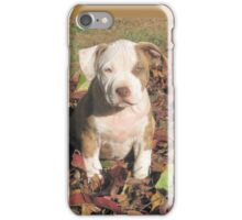 """""""Spice"""" In The Fall Leaves iPhone Case/Skin"""