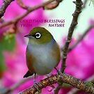 Christmas Blessings From Nature- Silvereye - NZ - Christmas card  by AndreaEL
