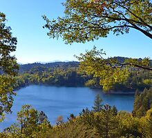GAZING THROUGH THE TREES AT LAKE ARROWHEAD by CHERIE COKELEY