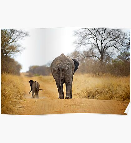 African Elephant (Loxodonta africana) mother and baby Poster