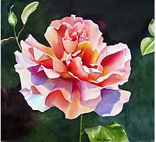 """""""Just Joey"""" Rose Watercolor Photographic Print"""