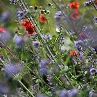 wild flowers by codaimages