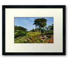 San Francisco Colorful Spring - Blooming Hillside with Pines Framed Print