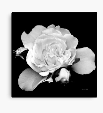 Rose Flower Black and White Canvas Print