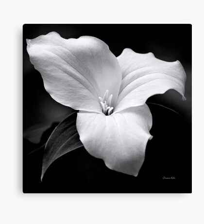 Trillium Flower Black and White Canvas Print