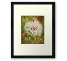 Make Two Wishes Framed Print