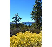BIG BEAR LAKE WITH BRIGHT YELLOW FALL FLOWERS Photographic Print